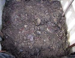Schon nach wenigen Wochen kann man die Regen- und Kompostwürmer bei der Arbeit beobachten.