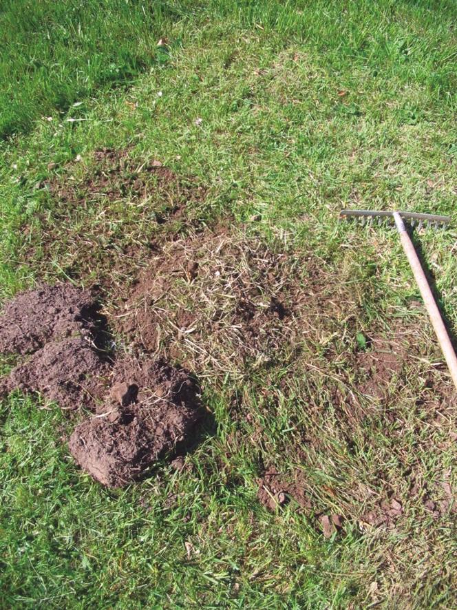 In das Pflanzloch kommt zuerst Küchenbokashi, darauf Gesteinsmehl und EMKeramikpulver, anschließend wird das Loch wieder mit dem Soden verschlossen. Nach vier bis sechs Wochen kann dann in das umgewandelte, organische Material gepflanzt werden.