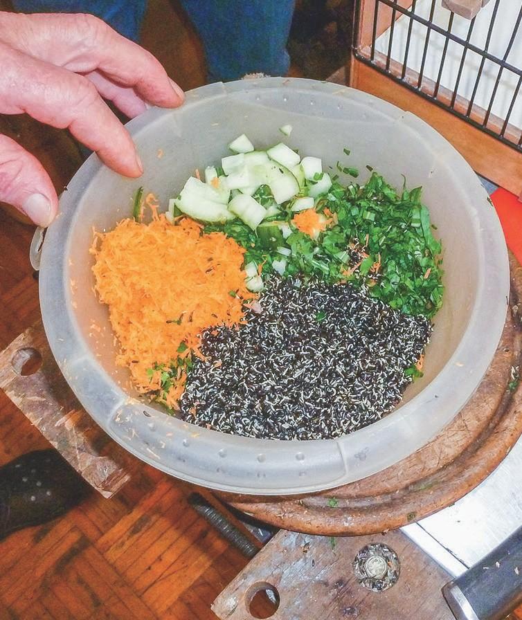 Das Futter aus frischem Gemüse und gekeimten Samen wird mit einer schwachen EM-Lösung besprüht.