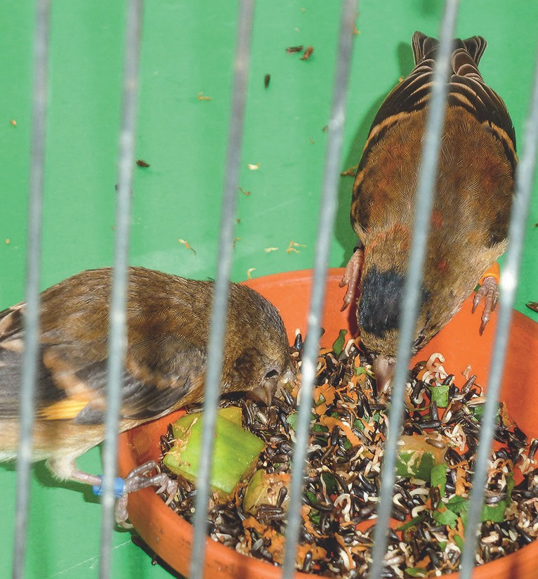Die Vögel nehmen das Futter mit EM immer gut an.