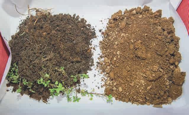 Der Unterschied zwischen dem ursprünglichen und dem EM + Kohle-Boden ist schon äußerlich klar zu erkennen.