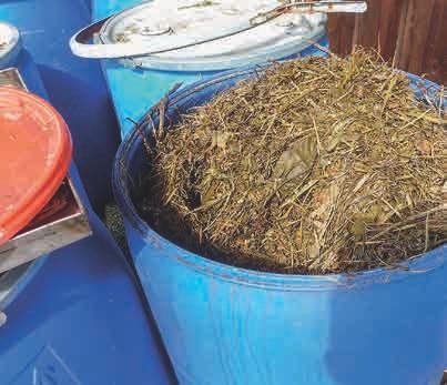 Mit EM fermentierte Grassilage ist erstklassiger Mulch, der das Bodenleben – und damit die Pflanzen – optimal ernährt.