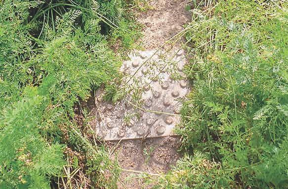 In den Beeten bieten quadratische Platten mit Noppen nicht nur einen sicheren und trockenen Stand, sondern unterstützen auch die nahebei wachenden Pflanzen, hier zwei Reihen von Karotten.