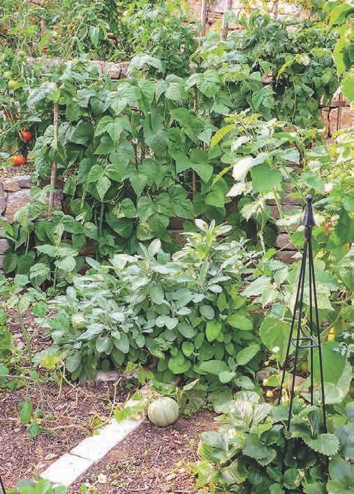 Einige der Formen eignen sich ausgezeichnet zur Begrenzung von Beeten oder Segmenten im Gemüsebeet.