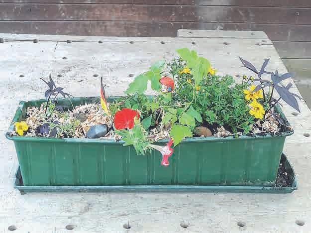 Wie ein Kunstwerk: von einem der Kinder bepflanzter und gestalteter Blumenkasten.