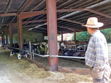 Derzeit liefern 60 Milchkühe EM-Biomilch