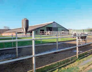 Jederzeit freier Auslauf für die Kühe