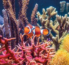 Fische düngen die Korallen