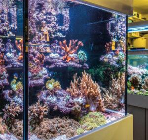 Für die Korallenzucht müssen alle Parameter genau stimmen