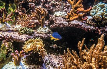 Bunte tropische Fische bereichern die Aquarien