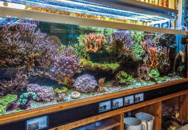 Farb- und Formenvielfalt der Korallenwelt