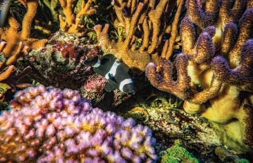 Aquarium mit Korallen und Fischen zum Entspannen