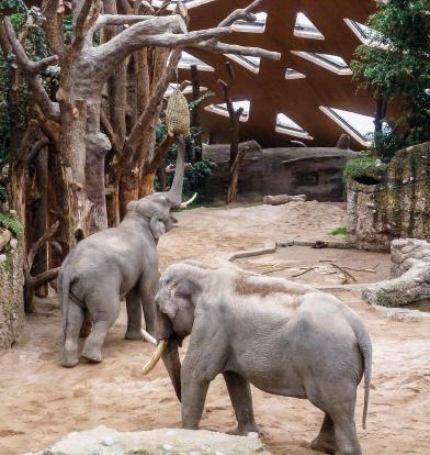 Für duftendes Heu müssen sich die Elefanten strecken.